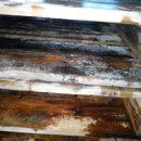 木托盘发霉也会致使货物惨遭退运